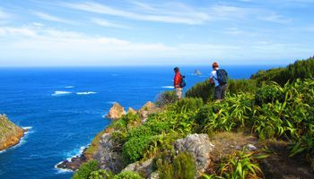Things To Do in the Chatham Islands